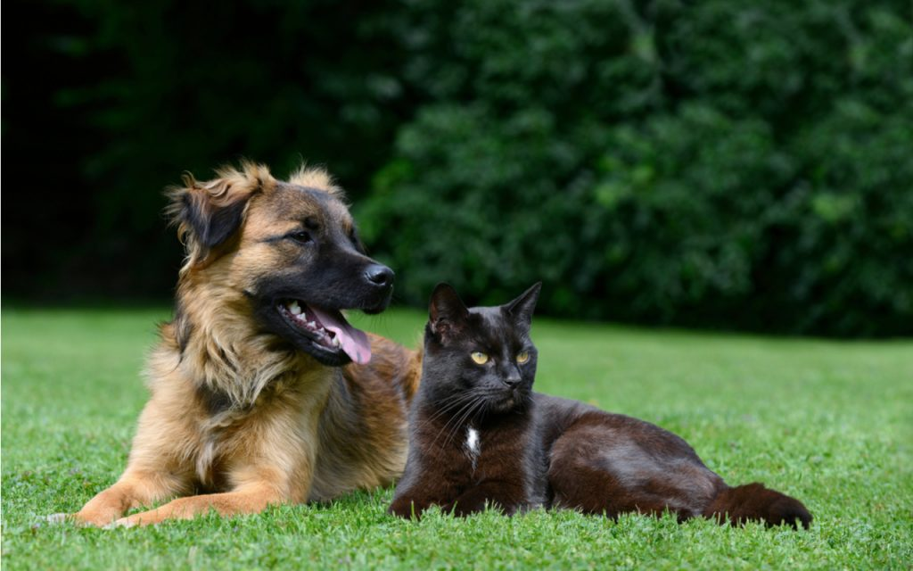 4 Fb Pages To Observe Regarding Cbd Oil For Canines Uk Holland As Well As Barrett